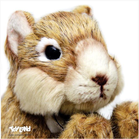 عروسک حیوانات طبیعی سنجاب