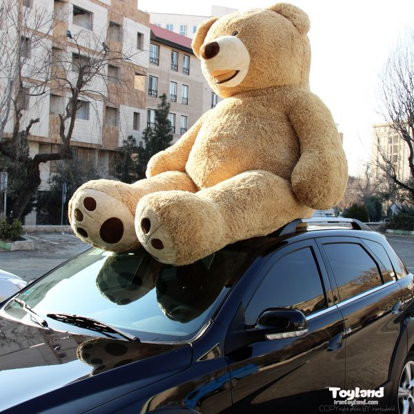 بزرگترین خرس پولیشی در ایران