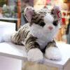 عروسک گربه نژاد کورل