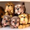 عروسک سگ بولداگ طبیعی